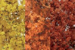 Woodland Scenics F1135 Fine Leaf Foliage - Fall Mix