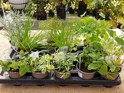 Herb Selection Bundle - Our Mix