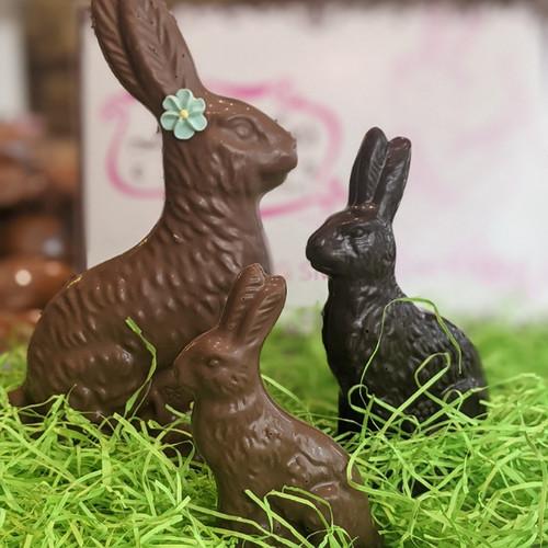 Sitting Bunny**
