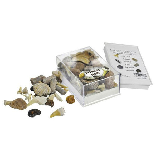 Mixed Fossil Box