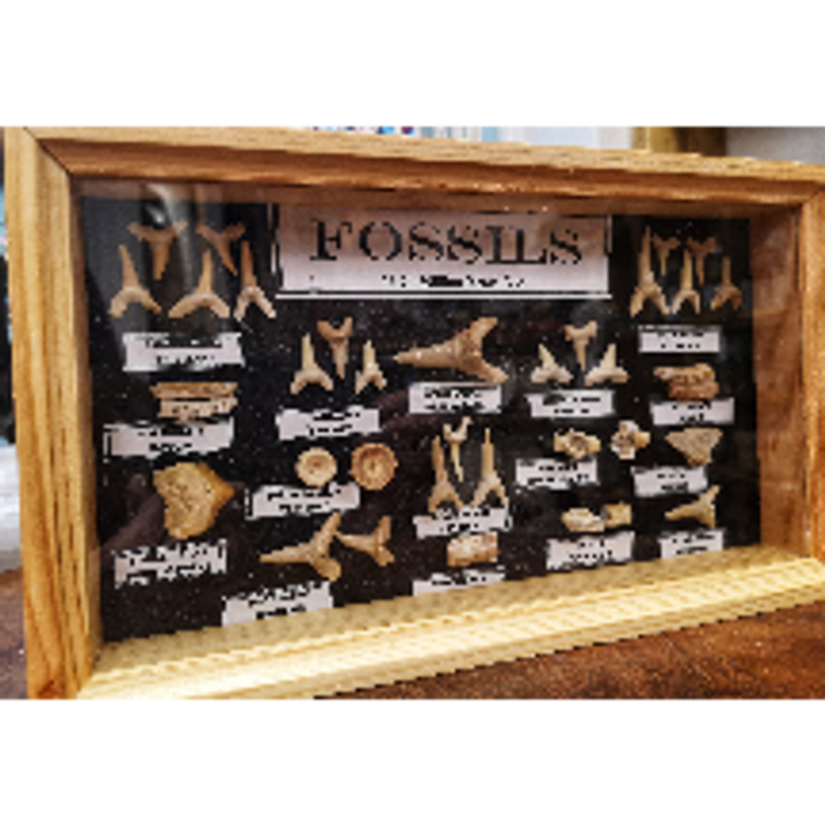Fossil Box Collectors
