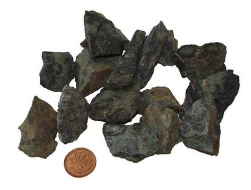 Rough Kambaba Jasper stone - Medium