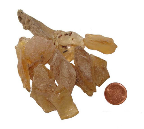 Copal Amber Stones - Size Teeny