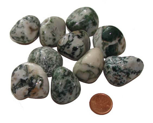 Tumbled Dendritic Tree Agate Stones - size extra large