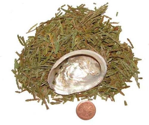 Cedar Sacred Smudging Herbs with small abalone shell