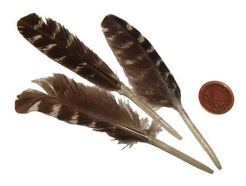 Small 4 inch duck or turkey feathers for smudging