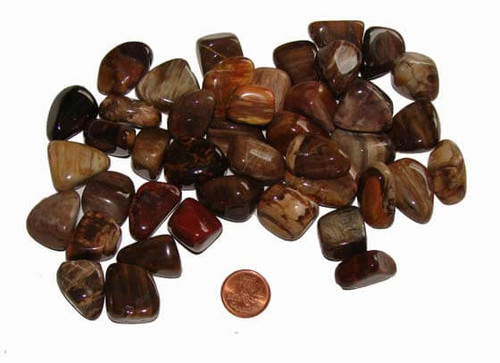 Tumbled Petrified Wood Stones - size small