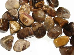 Petrified Wood is a good grounding stone – Free info on metaphysical properties and how to use with purchase - Free shipping over $60.