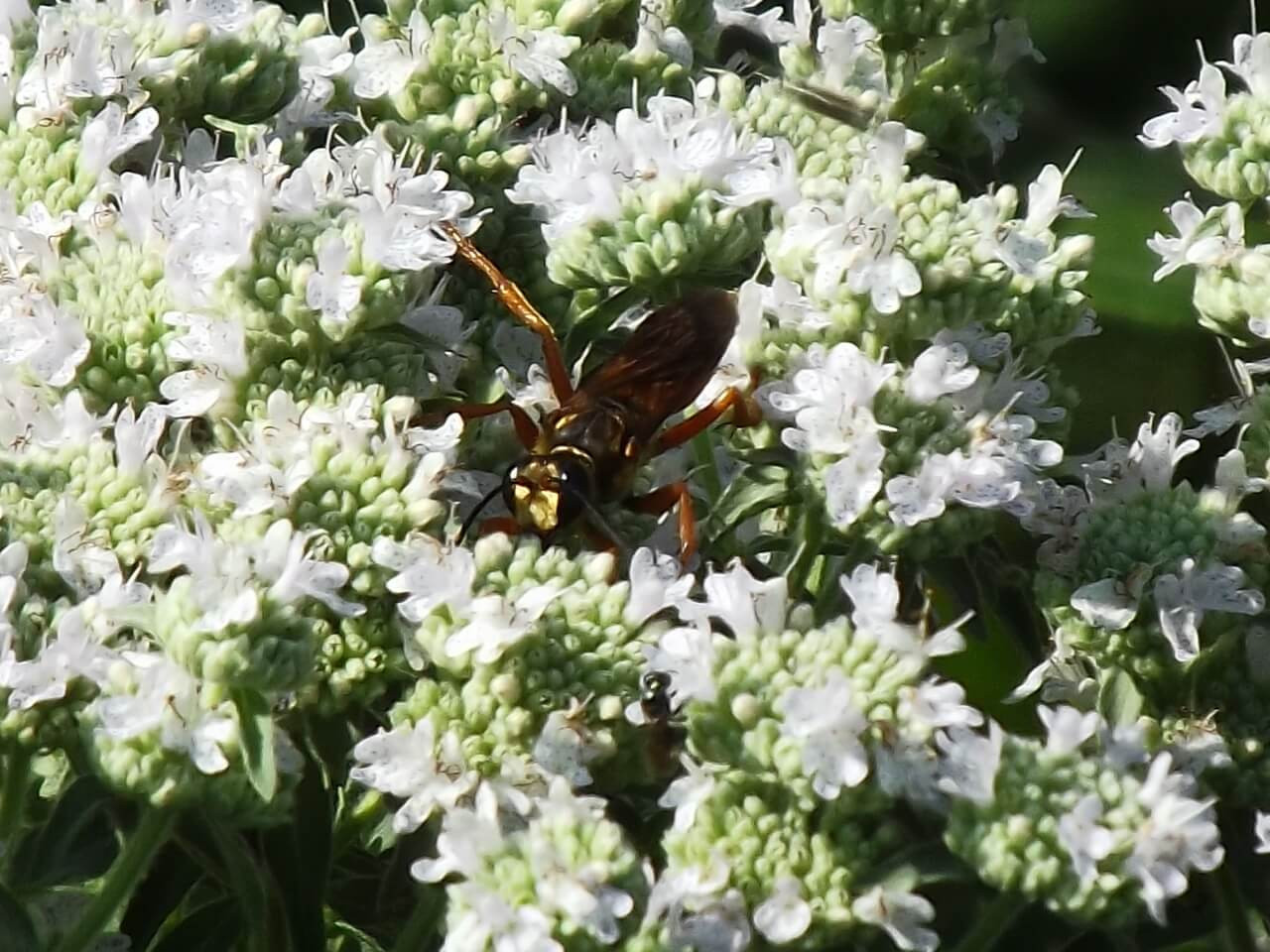 What is a Pollinator?