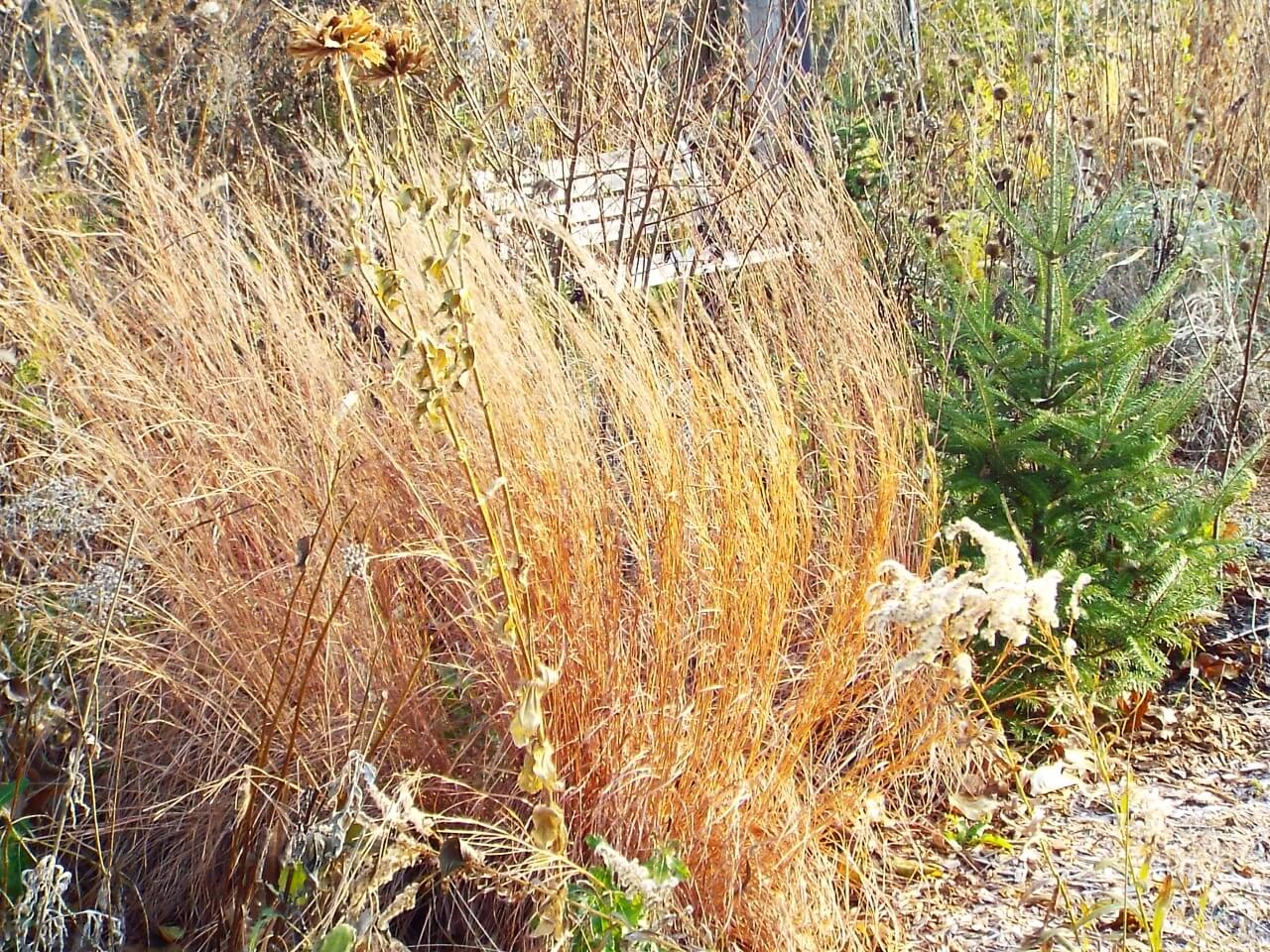 Should You Really Cut Back Your Native Grass In The Winter