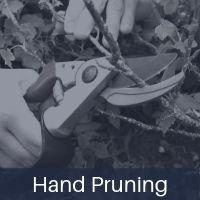 hand-pruning.jpg