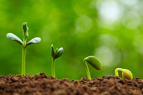 All About Seeds Germination - theseedsmaster