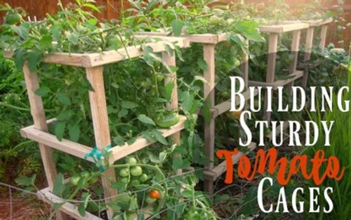 Supporting Tomatoes with Cages