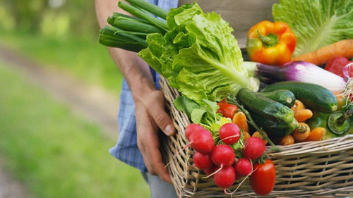 Easy To Grow Vegetables For The Beginners