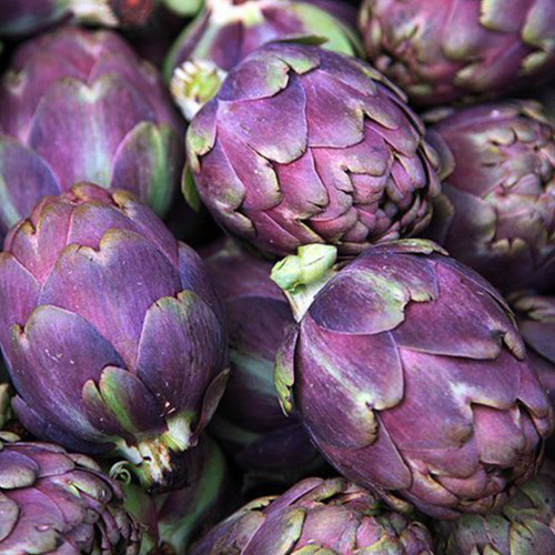 Artichoke 'Violet De Provence' (Cynara Cardunculus L.) Vegetable Plant Heirloom, 46 Seeds