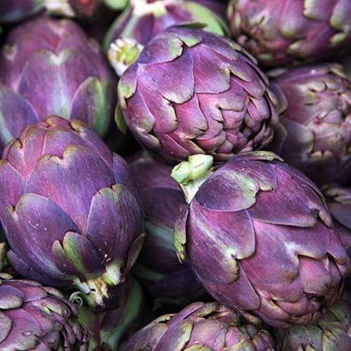 Artichoke 'Violet De Provence' (Cynara Cardunculus L.) Vegetable Plant Heirloom, 46 Seeds