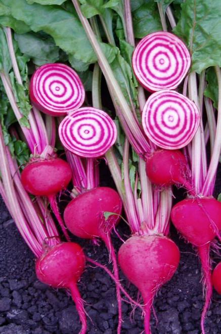 Beetroot 'Tonda Di Chioggia' (Beta Vulgaris L.) Vegetable Plant Heirloom, 400-550 Seeds