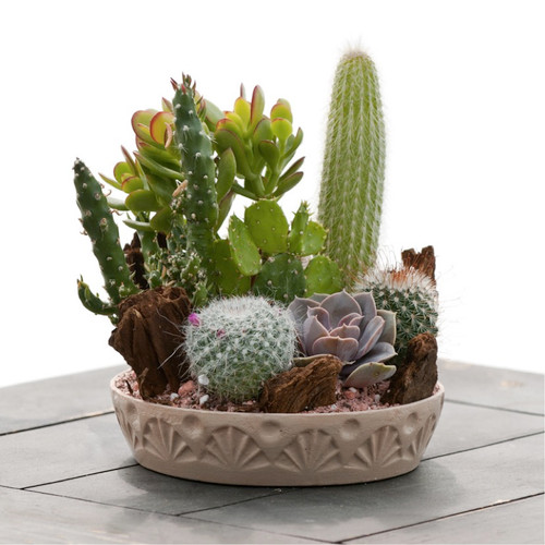 Cactus 'Mix' (Cacti) Flower Plant Heirloom, 0.1g (0.003oz) Seeds