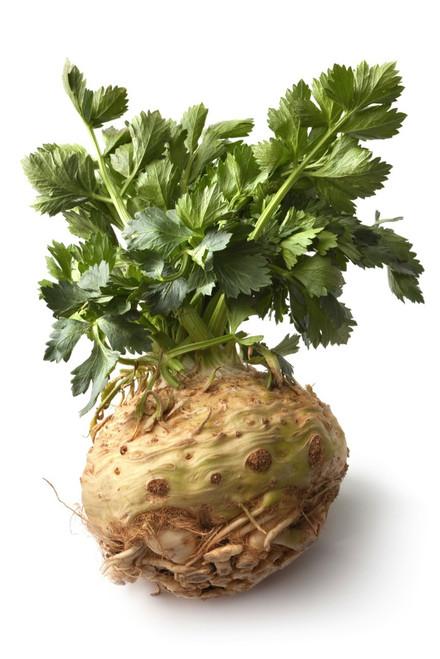 Celery Root 'Giant Prague' (Apium Graveolens L.) Vegetable Plant Heirloom, 360 Seeds