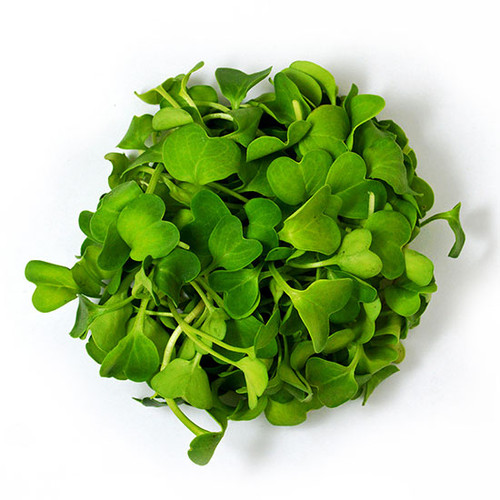 Radish Sprouting Organic Heirloom, 6g (0.2oz) Microgreen Seeds