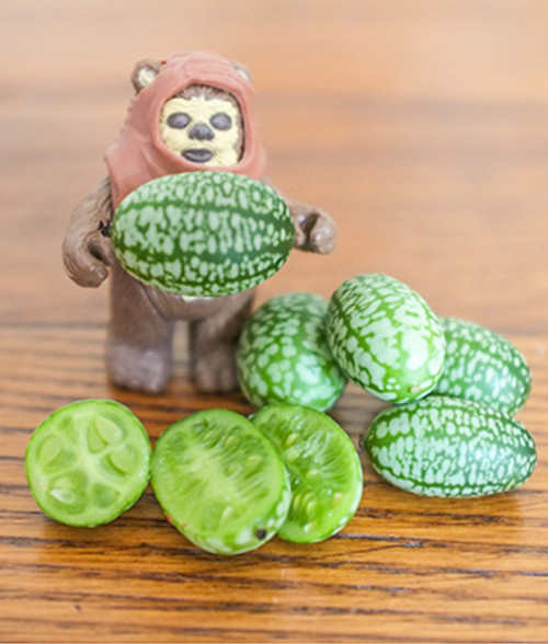 Mouse Melon (Melothria Scabra) Fruit Plant Heirloom, 10 Seeds