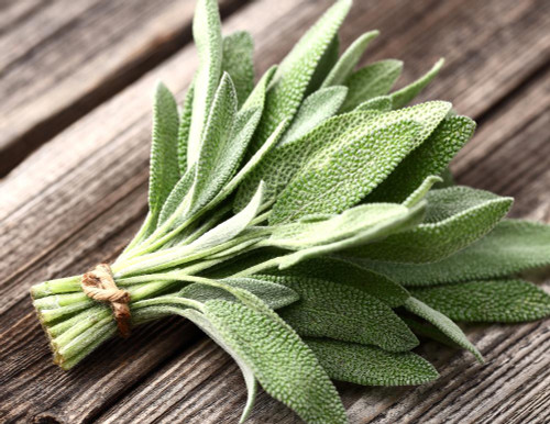 Sage (Salvia Officinalis L.) Herbal Plant Heirloom, 130 Seeds