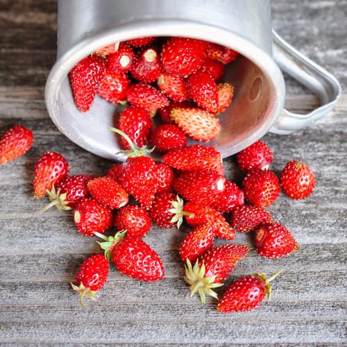 Alpine Strawberry 'Regina' (Fragaria Vesca) Fruit Plant Heirloom, 300 Seeds