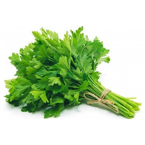 Parsley Leafy 'Festival 68' (Petroselinum Crispum) Herbal Plant Heirloom, 1200 Seeds