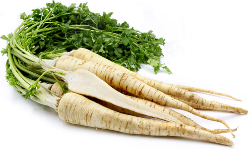 Parsley Root 'Alba' (Petroselinum Crispum) Vegetable Plant Heirloom,1000-1200 Seeds