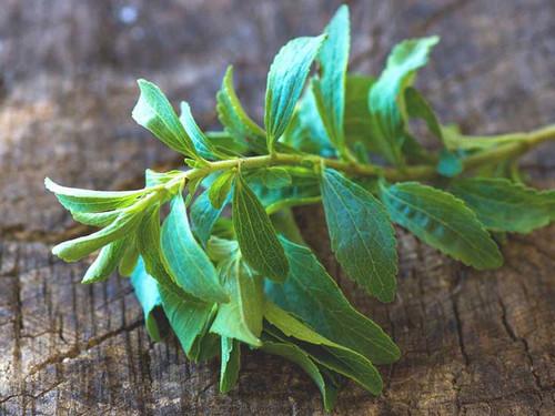 Honey Stevia (Stevia Rebaudiana) Herbal Plant Heirloom, 10 Seeds