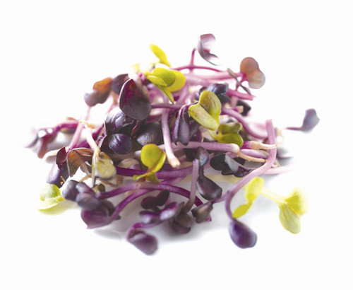Radish Red 'Sango' (Raphanus Sativus) Microgreens Heirloom, 5g (0.17oz) Sprouting Seeds