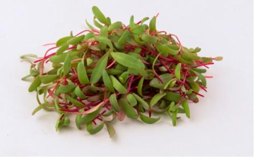 Beetroot Organic 'Noire D'Egypte' (Beta Vulgaris) Organic Microgreens Heirloom, 30g (1.05oz) Sprouting Seeds