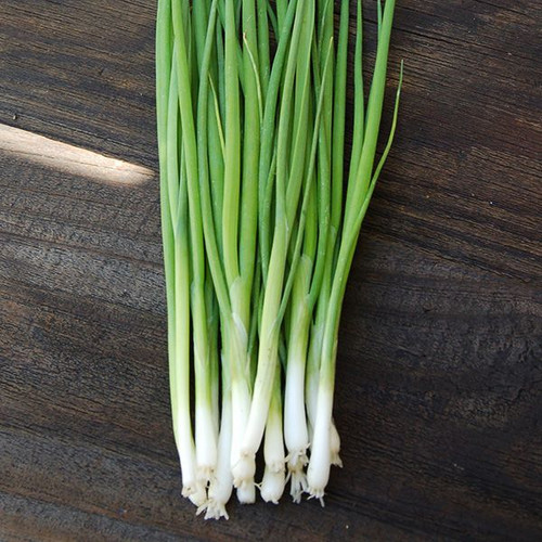 Onion 'White Lisbon' (Allium Cepa) Vegetable Plant Heirloom,300-480 Seeds