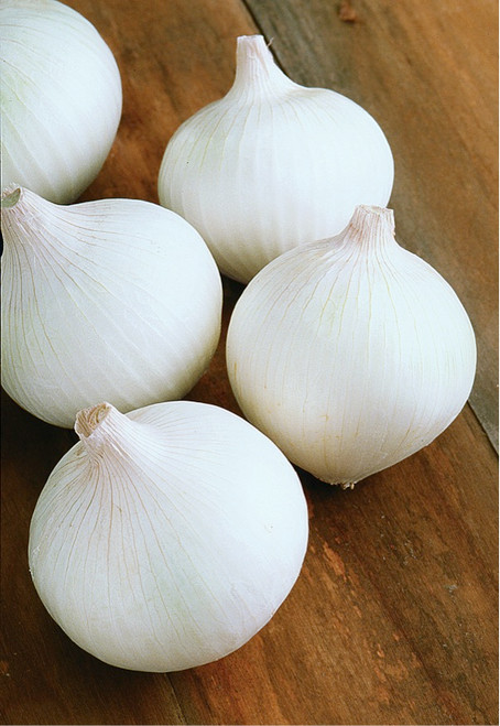 Onion 'Albienka' (Alemium Cepa) Vegetable Plant Heirloom,250-450 Seeds