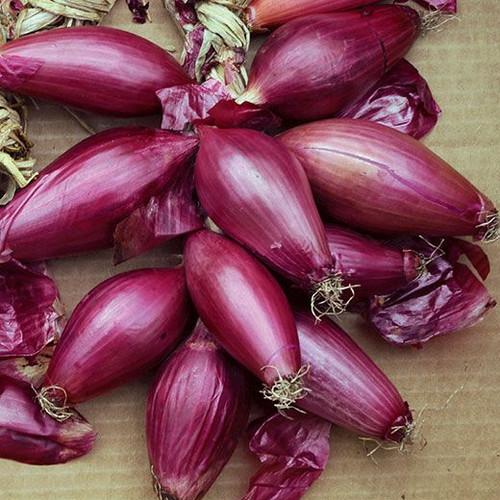Onion 'Rossa Lunga Di Firenze' (Alemium Cepa) Vegetable Plant Heirloom,200-320 Seeds
