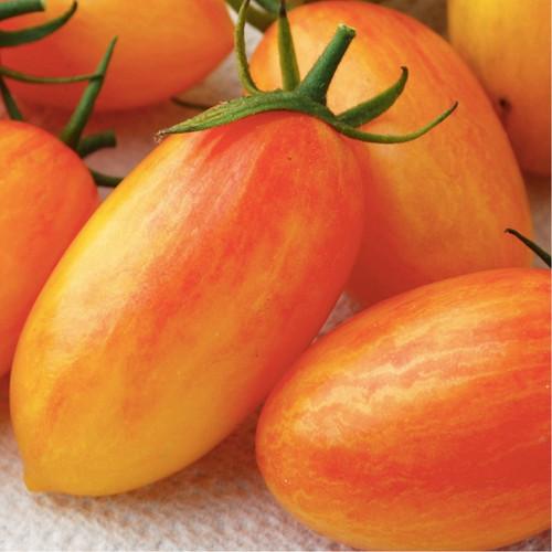 Tomato 'Blush' (Lycopersicon Esculentum Mill) Organic Vegetable Plant Heirloom, 10 Seeds
