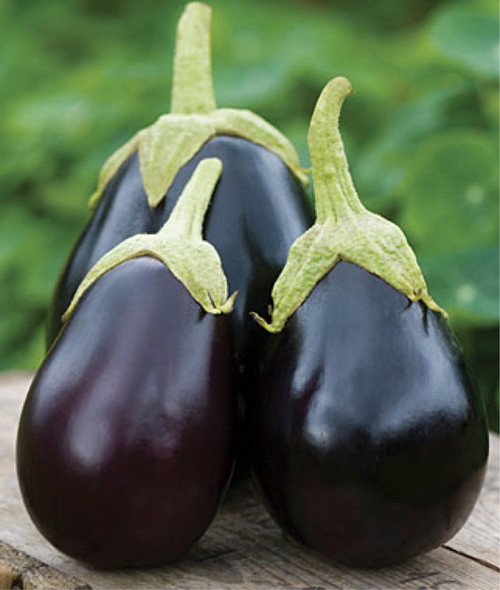 Eggplant 'Black Beauty' (Solanum Melongena) Vegetable Plant Heirloom, 20-22 Seeds