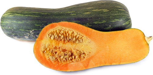 Pumpkin 'Naples Long' (Cucurbita Moschata) Vegetable Plant Heirloom, 4-12 Seeds