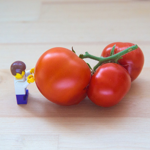Tomato 'Betalux' (Solanum Lycopersicum L.) Vegetable Plant Heirloom, 50-55 Seeds