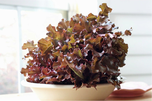 Lettuce 'Red Salad Bowl' (Lactuca Sativa) Vegetable Plant Heirloom, 800-1200 Seeds