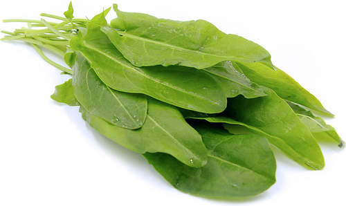Sorrel 'Lyonski' (Rumex Acetosa L.) Vegetable Plant Heirloom, 3000 Seeds