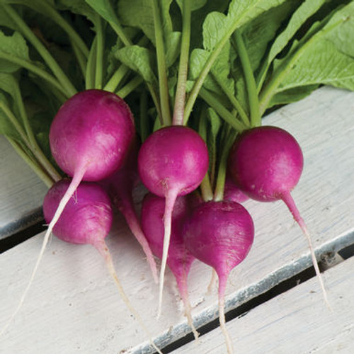 Radish 'Viola' (Raphanus Sativus L.) Vegetable Plant Heirloom, 210-360 Seeds