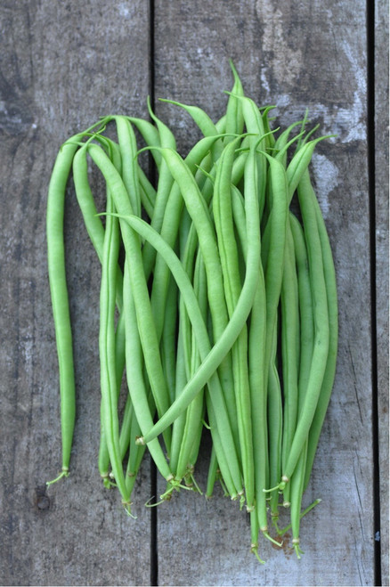Bean 'Argus' (Phaseolus Vulgaris L.) Organic Vegetable Plant Heirloom,7-21  Seeds