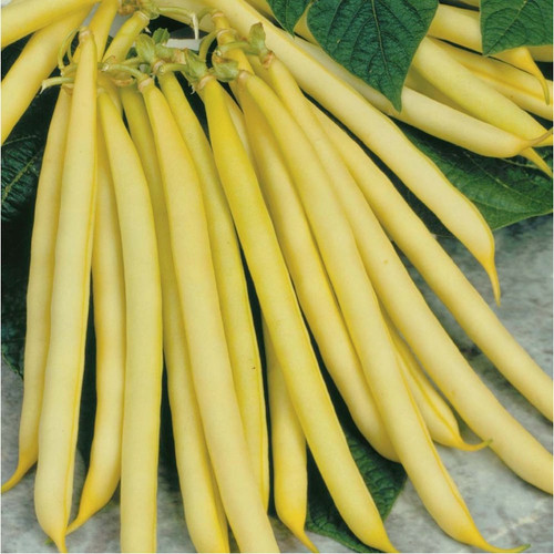 Bean 'Goldmarie' (Phaseolus Vulgaris) Vegetable Plant Heirloom,60-100 Seeds