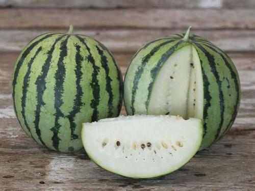 Watermelon 'Creamy Saskatchewan'  (Citrullus Lanatus) Fruit Plant Heirloom, 10 Seeds