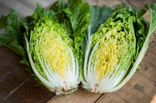 Cabbage Chinese 'Granaat' (Brassica Oleracea L.) Vegetable Plant Heirloom, 500-600 Seeds