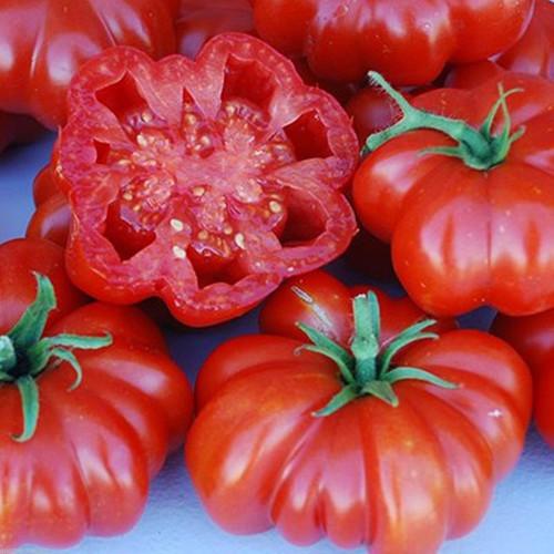 Tomato 'Pantano Romanesco' (Solanum lycopersicum) Indeterminate Heirloom, 20-30 Seeds
