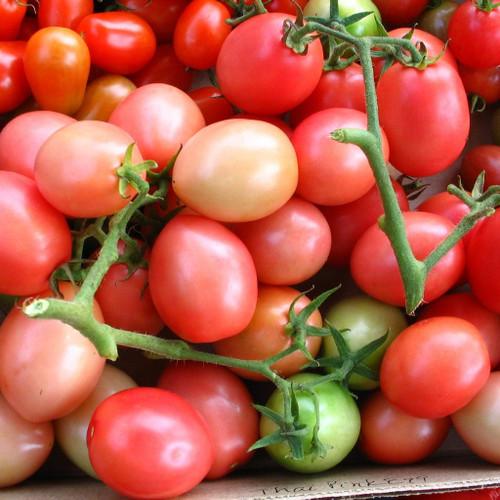 Tomato 'Pink Thai Egg' (Solanum lycopersicum) Determinate Heirloom, 20-30 Seeds