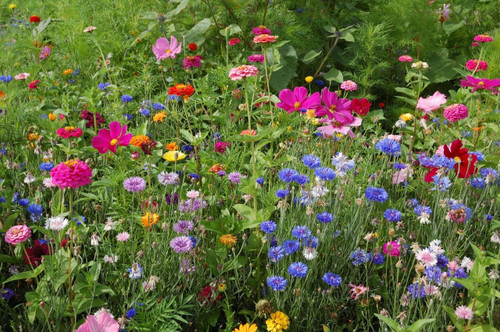 Annual Flower Mix 'Last Minute' Heirloom, 1g of Seeds