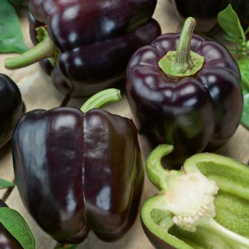 Sweet Bell Pepper 'Oda' (Capsicum annuum) Heirloom, 20-30 Seeds